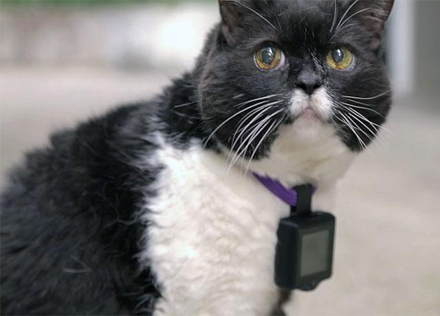 Photo of CATSTACAM permite pisicii sa-si posteze pozele pe Instagram