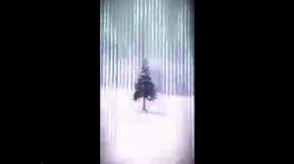 one tree Hokkaido