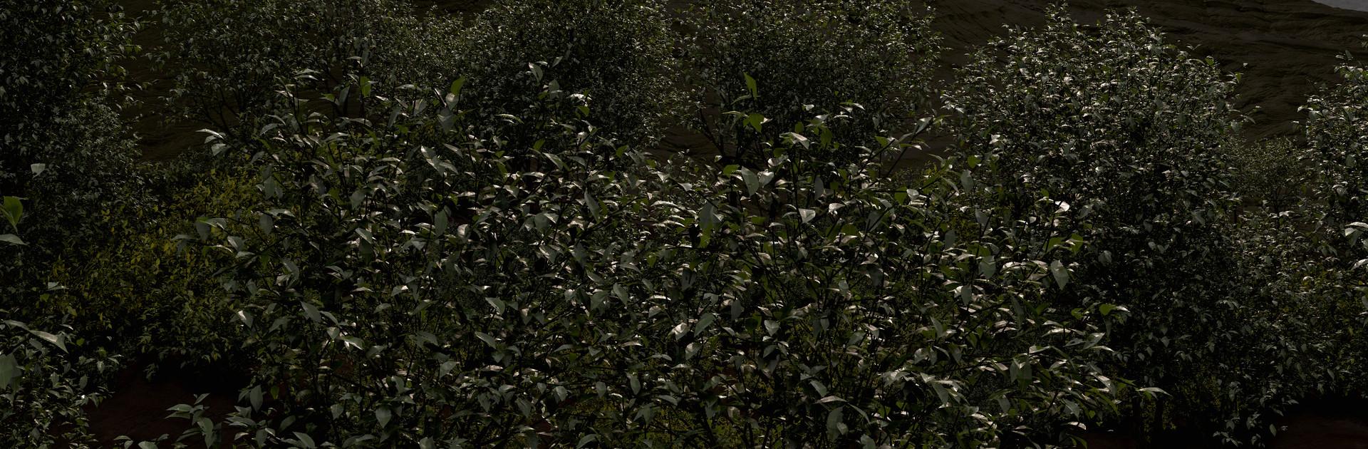 eoin-o-broin-foliage (1)