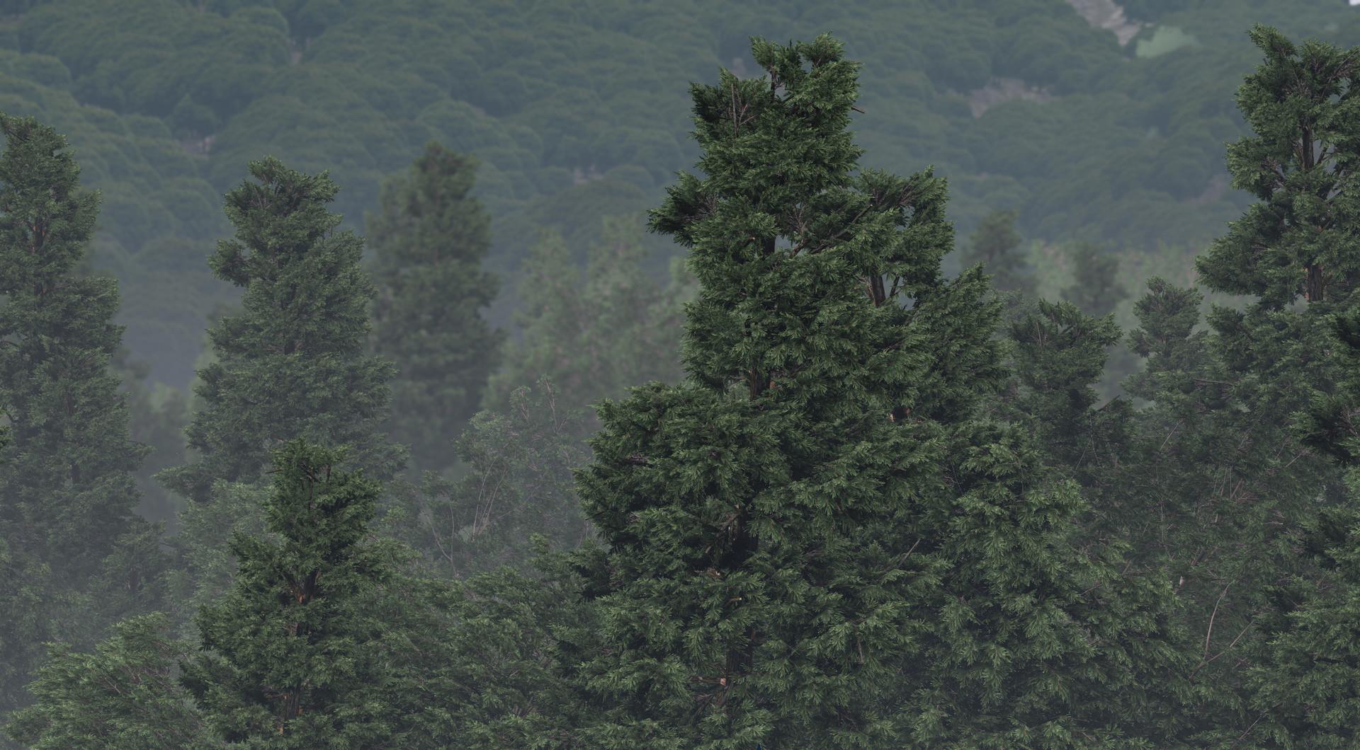 eoin-o-broin-forest02