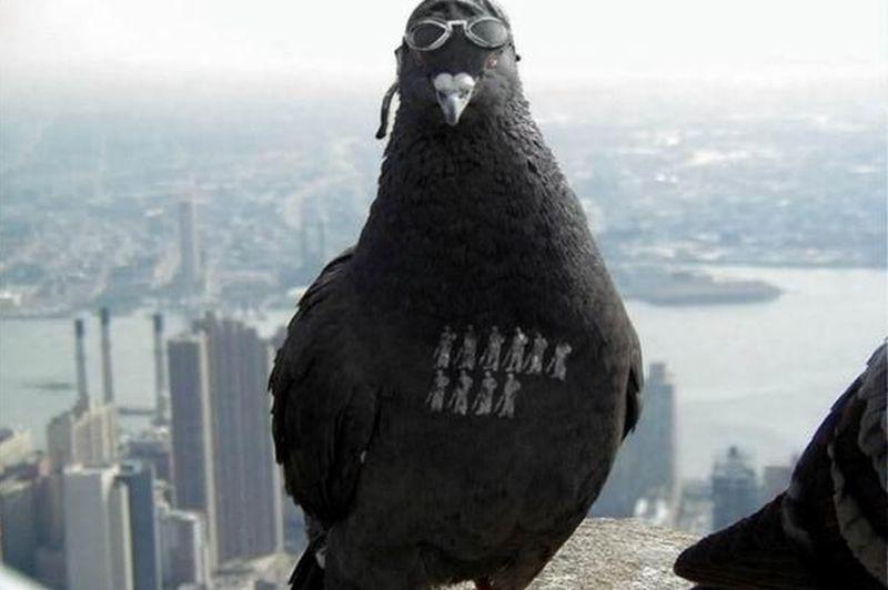 Photo of Battlefield 1 ar putea avea un mod cu porumbei