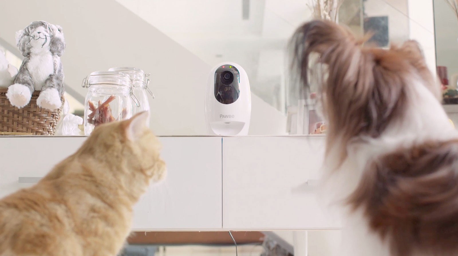 Photo of Acum te poți juca cu câinele prin Wi-Fi, cu Pawbo+