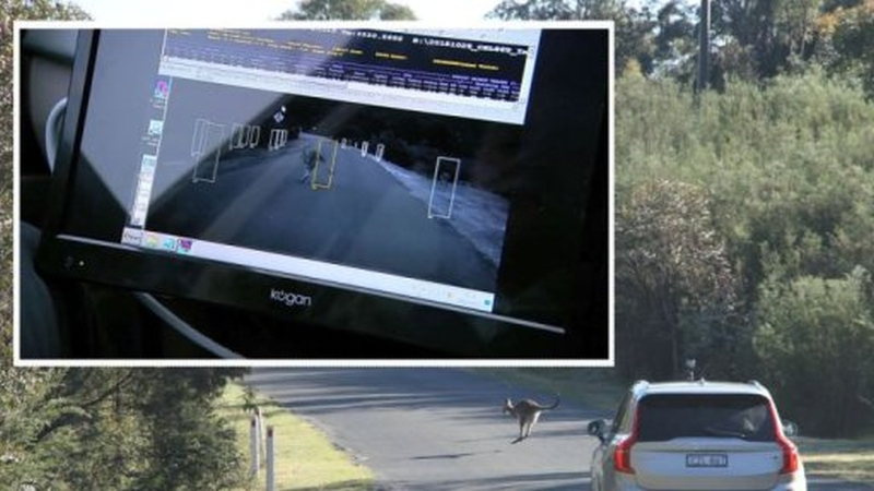 Photo of Mașinile autonome nu pot înțelege cangurii