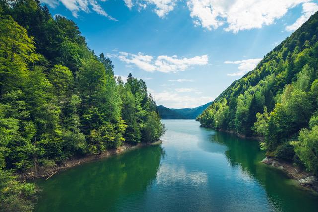 Photo of Greenpeace România lansează Forest Guardians, aplicația de mobil prin care poți salva pădurile de tăieri ilegale